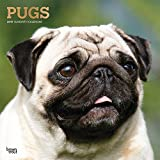Pugs 2019 12 x 12 Inch Monthly Square Wall Calendar with Foil Stamped Cover, Animals Dog Breeds