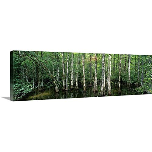 GREATBIGCANVAS Gallery-Wrapped Canvas Entitled Big Cypress Nature Preserve FL by 48