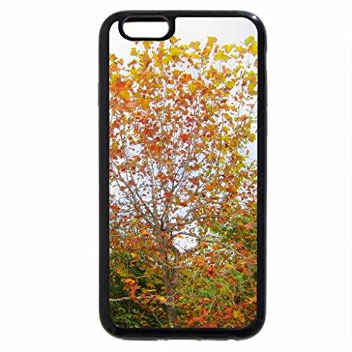 iPhone 6S / iPhone 6 Case (Black) Golden maple