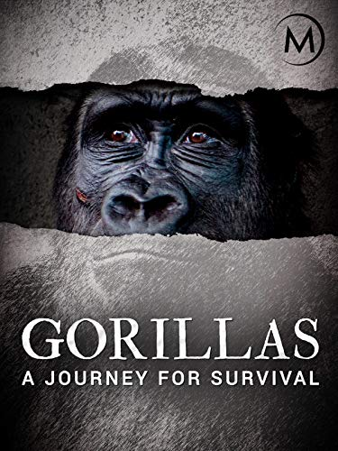 Gorillas: A Journey For Survival (Mountain Gorilla)