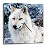 3dRose dpp_173719_3 Rocky Mountain Gray Wolf-Wall Clock, 15 by 15-Inch