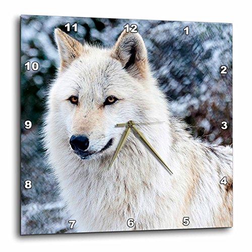 3dRose dpp_173719_3 Rocky Mountain Gray Wolf-Wall Clock, 15 by 15-Inch