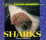 Sharks, Melissa S. Cole, 1567114423