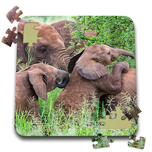 - 3dRose Danita Delimont - Elephants - Africa. Tanzania. African Elephants at Tarangire National Park. - 10x10 Inch Puzzle (pzl_312520_2)