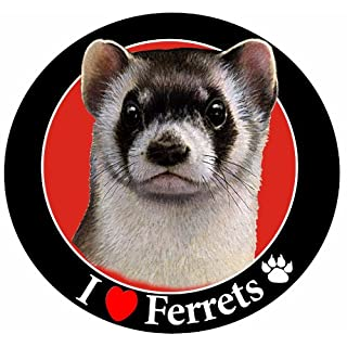 E&S Pets I Love Ferrets Car Magnet with Realistic Looking Ferret Photograph in The Center Covered in UV Gloss for Weather and Fading Protection Circle Shaped Magnet Measures 5.25 Inches Diameter