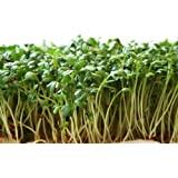 Garden Cress Seeds (Peppergrass by Stonysoil Seed Company