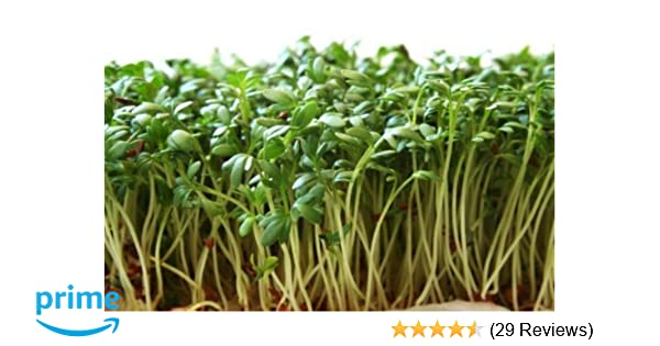 Amazon.com : Garden Cress Seeds (Peppergrass by Stonysoil Seed ...