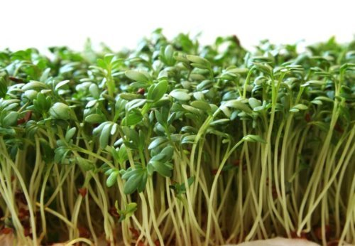 Garden Cress Seeds (Peppergrass by Stonysoil Seed ()