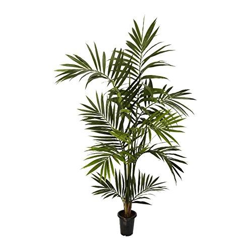 Kentia Silk Palm Tree - 6 Feet Tall (Kentia Palm Tree)