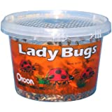 Orcon LB-C1500 Live Ladybugs, Approximately 1,500 Count