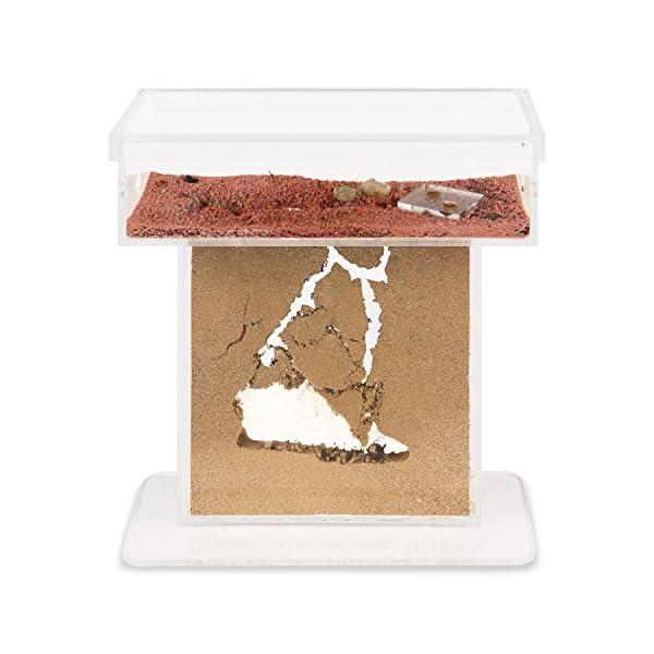 AntHouse - Formicaio Naturale di Sabbia - Kit T Acrilico 15x15x1,5 cm (Formiche Incluse con Regina) 2 spesavip