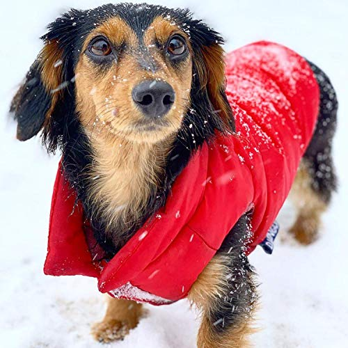 DJANGO Puffer Dog Jacket and Reversible Cold Weather Dog Coat with Full Coverage and Windproof Protection (Medium, Lava Red/Buffalo Plaid)