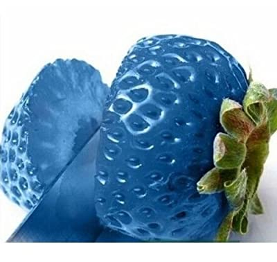 FD792 Blue Strawberry Seeds Nutritious Delicious Fruits Seed Strawberries 50PCs