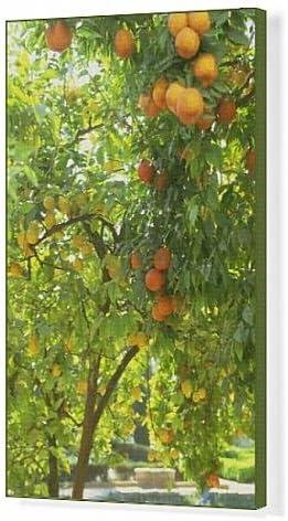 Arte en lienzo de naranja y amarillo de árboles en los jardines del Alcazar, Cordoba, Andalucía, España, Europa: Amazon.es: Hogar