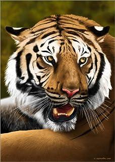 Posterlounge Stampa su PVC 90 x 130 cm: Tiger di Fernando Ferreiro