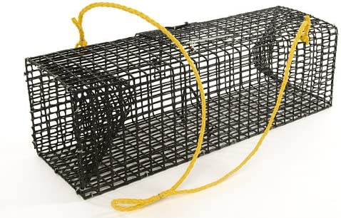 Image result for Traps works best for crawfishing