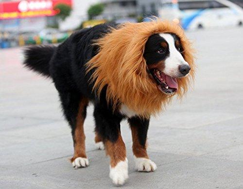 & Looching Lion Mane Dog Costume Wig Brown: Amazon.ca: Pet Supplies