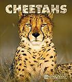 Cheetahs, Jenny Markert, 1592966322