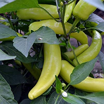 Hungarian Yellow Wax Hot Pepper Garden Seeds - Non-GMO, Heirloom Vegetable Gardening Seed
