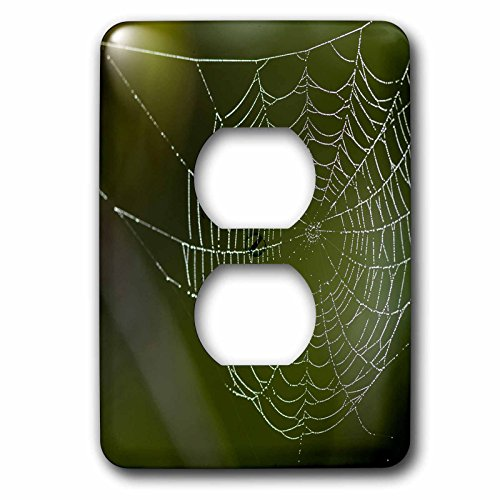 3dRose Danita Delimont - Spiders - Dew hangs on a spider web, Bradenton, Florida - Light Switch Covers - 2 plug outlet cover - Bradenton Outlets