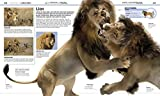 Knowledge Encyclopedia Animal!: The Animal Kingdom as You're Never Seen it Before