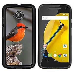 TECHCASE---Cubierta de la caja de protección para la piel dura ** Motorola Moto E ( 2nd Generation ) ** --rojo songbird gris pájaro lindo minúsculo pequeño