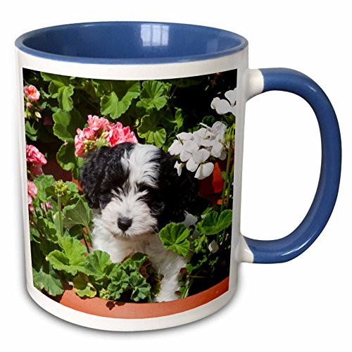 Havanese Two Tone Coffee Mug11 Ounce