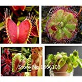 home & garden 100 Mix Carnivore Carnivorous Pack Species Seeds - Venus Flytrap & Sundews Bulk Seed Pack Verieties Bonsai Flowe