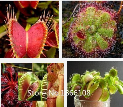 The 8 best carnivorous plant seeds