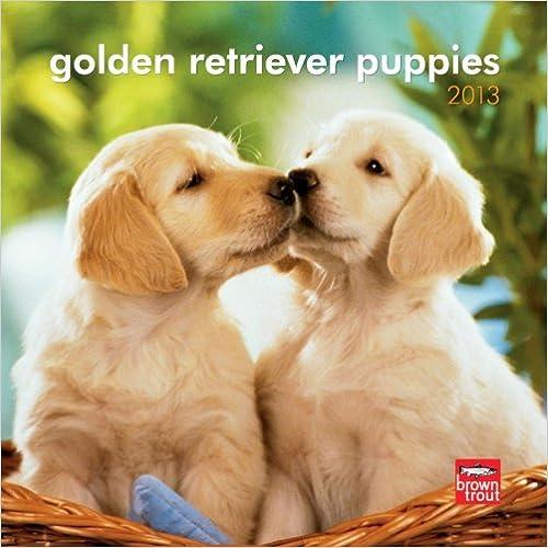 Gratis ebook downloads google bøger Golden Retriever Puppies 2013 7X7 Mini Wall PDF FB2 iBook 1421695227