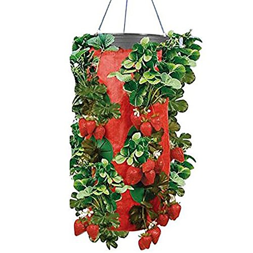 (Topsy Turvy Strawberry Upside Down Planters (Pack of 4))