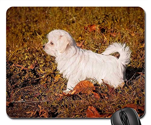 Gaming Mouse Pads,Mouse mat,Dog Puppy Young Dog Small Maltese White Animal -