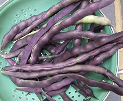 Blauhilde Pole Bean Seeds- Heirloom Variety- 20+ Seeds $1.69 Max. Shipping
