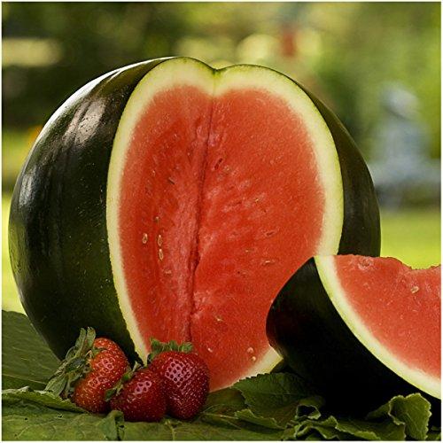 Package of 100 Seeds, Sugar Baby Watermelon (Citrullus lanatus)