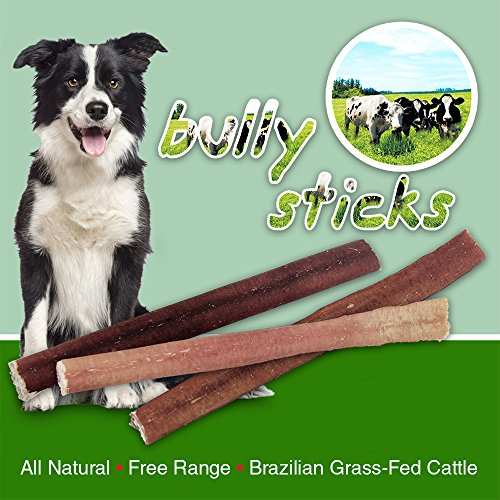 GigaBite by Best Pet Supplies - USDA & FDA Certified Odor-Free Medium Select Plain Beef Bully Sticks for Dogs - 100% All Natural Free Range Beef Pizzle- Healthy Dental Teeth Cleaning Dog Chews- Best Chewy Pet Treats (25 P chic