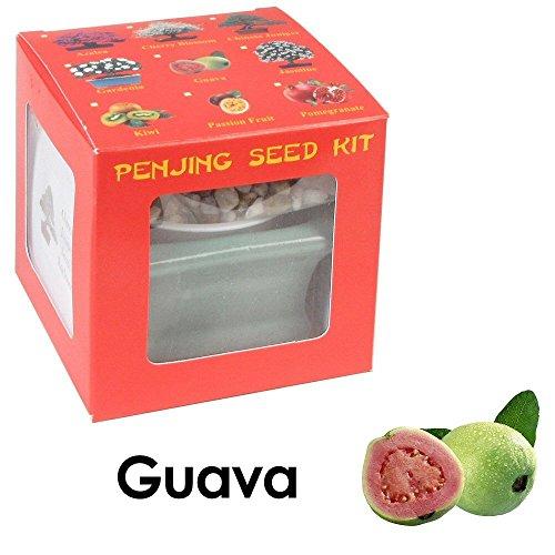 fruit bearing bonsai - 2