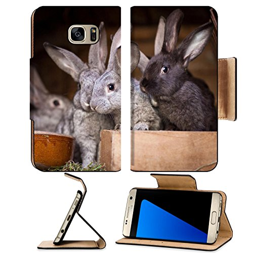 - MSD Premium Samsung Galaxy S7 Edge Flip Pu Wallet Case IMAGE ID: 11533654 Young rabbits popping out of a hutch European Rabbit Oryctolagus cun