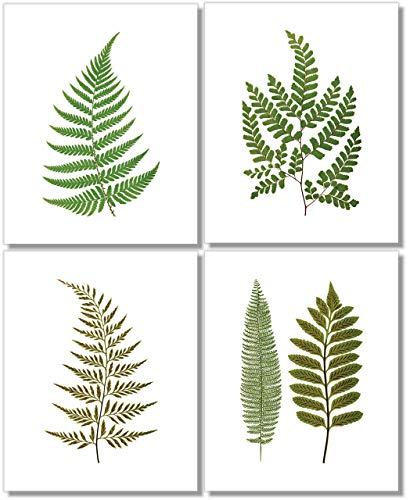 Fern Wall Art (Set of 4) - 8x10 - Unframed - Botanical Prints - Green Decor ()