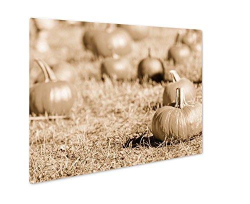 Ashley Giclee Pumpkin Patch, Wall Art Photo Print On Metal Panel, Sepia, 24x30, Floating Frame, AG6121645 -