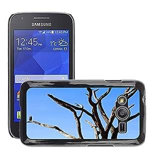Etui Housse Coque de Protection Cover Rigide pour // M00113874 Buitre árbol Pájaro África Tanzania // Samsung Galaxy Ace4 / Galaxy Ace 4 LTE / SM-G313F