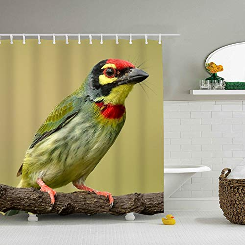 Enjoytm Coppersmith Barbet Custom Shower Curtain Extra Long Bathroom Curtains for Housewarming Gift]()