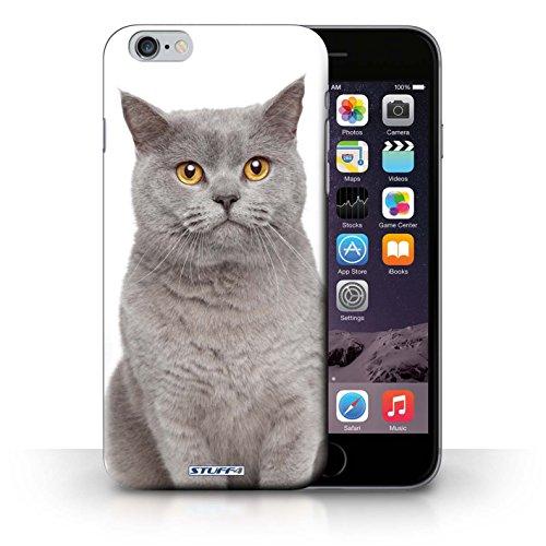 Hülle Case für iPhone 6+/Plus 5.5 / britische Blau Entwurf / Katze Collection