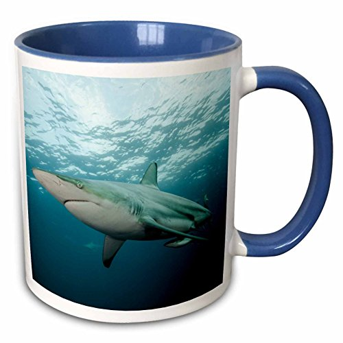 3dRose Danita Delimont - Sharks - Black-tip shark and Remora, Africa - 15oz Two-Tone Blue Mug (mug_225122_11)