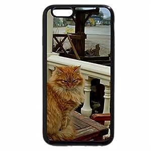 iPhone 6S Plus Case, iPhone 6 Plus Case, Cat posing.