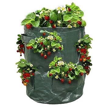 ou planter ses fraisiers