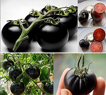 SOTEER Bonsai Seltene Samen Tomate Black Cherry Gemüsesamen Obstsamen, 20 Stück/Pack, Bonsai geeignet 20 Stück/Pack