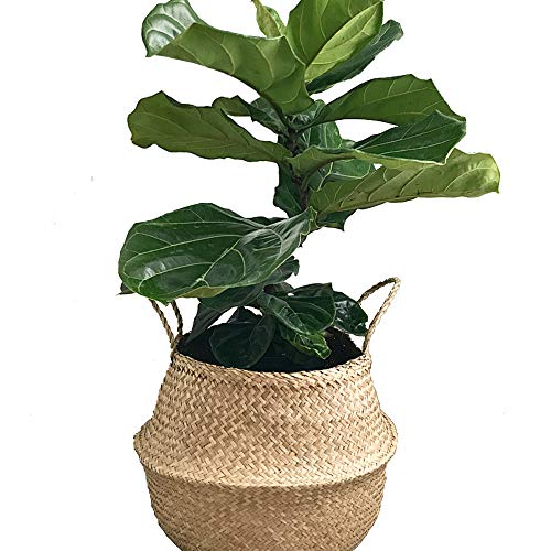 (VNCraft Foldable Medium Seagrass Belly Basket with Handles (Size: 14x14x13 inches) for Storage, Nursery Laundry Tote Beach Bag Plant Pots Cover Indoor)
