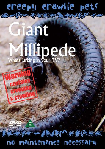 Amazon com: Creepy Crawlie Pets / Giant Millipede: Movies & TV