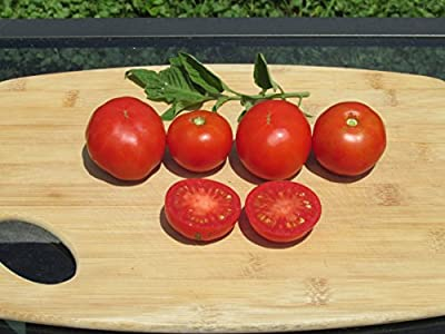 Stupice Organic Tomato Seeds- Super Early Heirloom Variety- 40+ Seeds by Ohio Heirloom Seeds