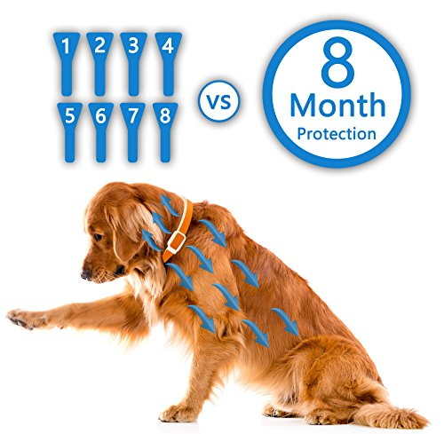 Best Natural Safe Design Flea And Tick Collar For Dogs 8
